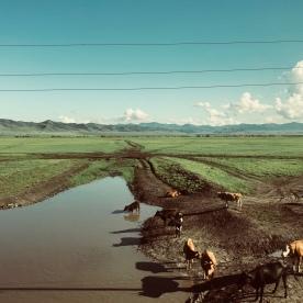 Maisema junan ikkunasta halki puolikkaan Mongolian.